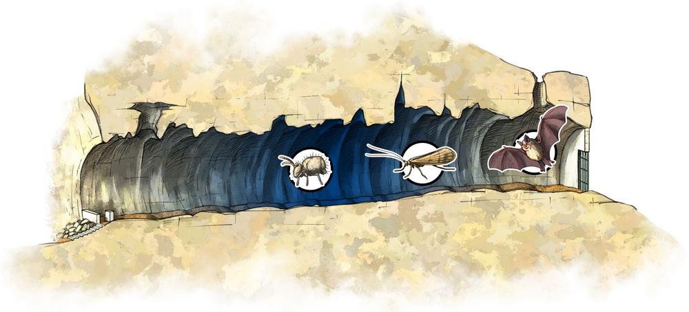 Habitats obscurs de la grotte