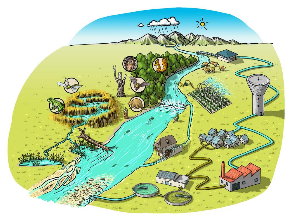 Les rôles de la rivière