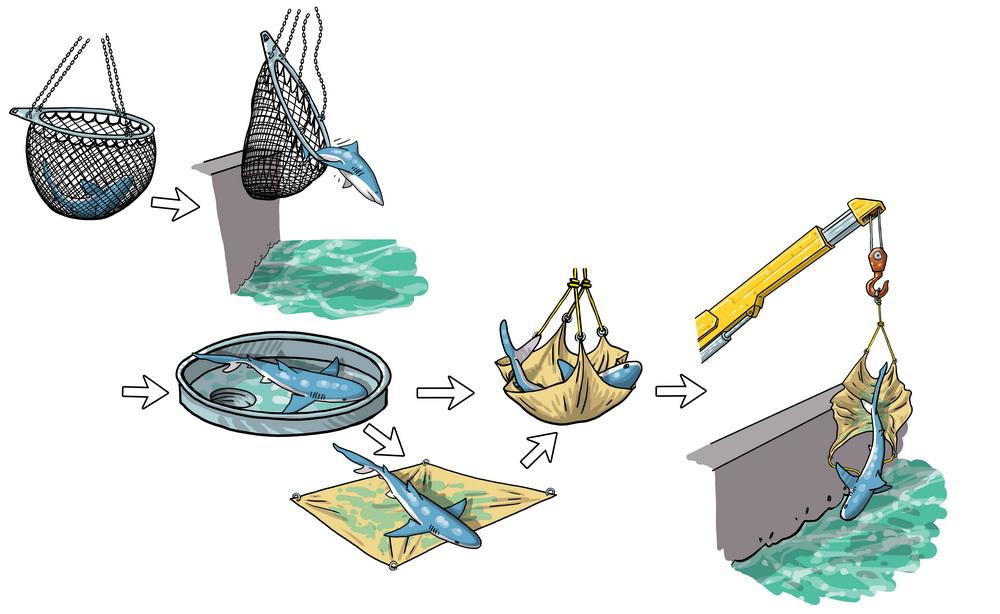 Libération des requins