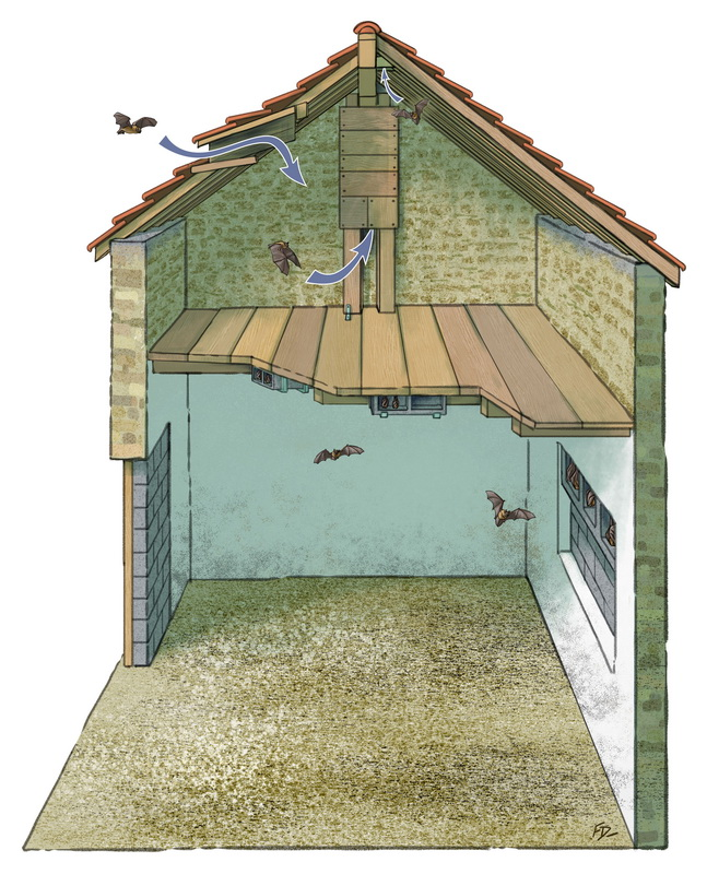 Maison des chauve-souris