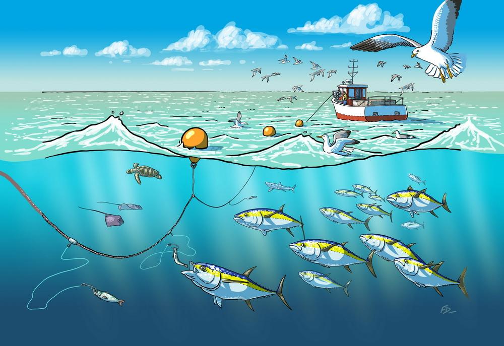 Pêche à la palangre