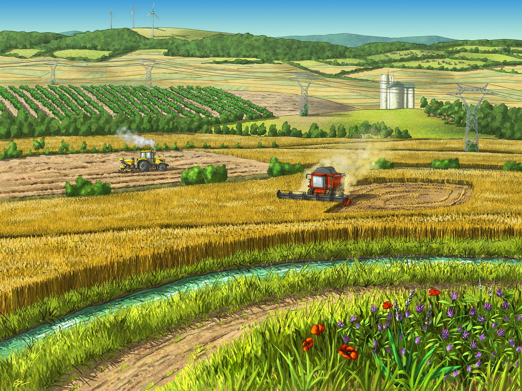 Paysage agricole